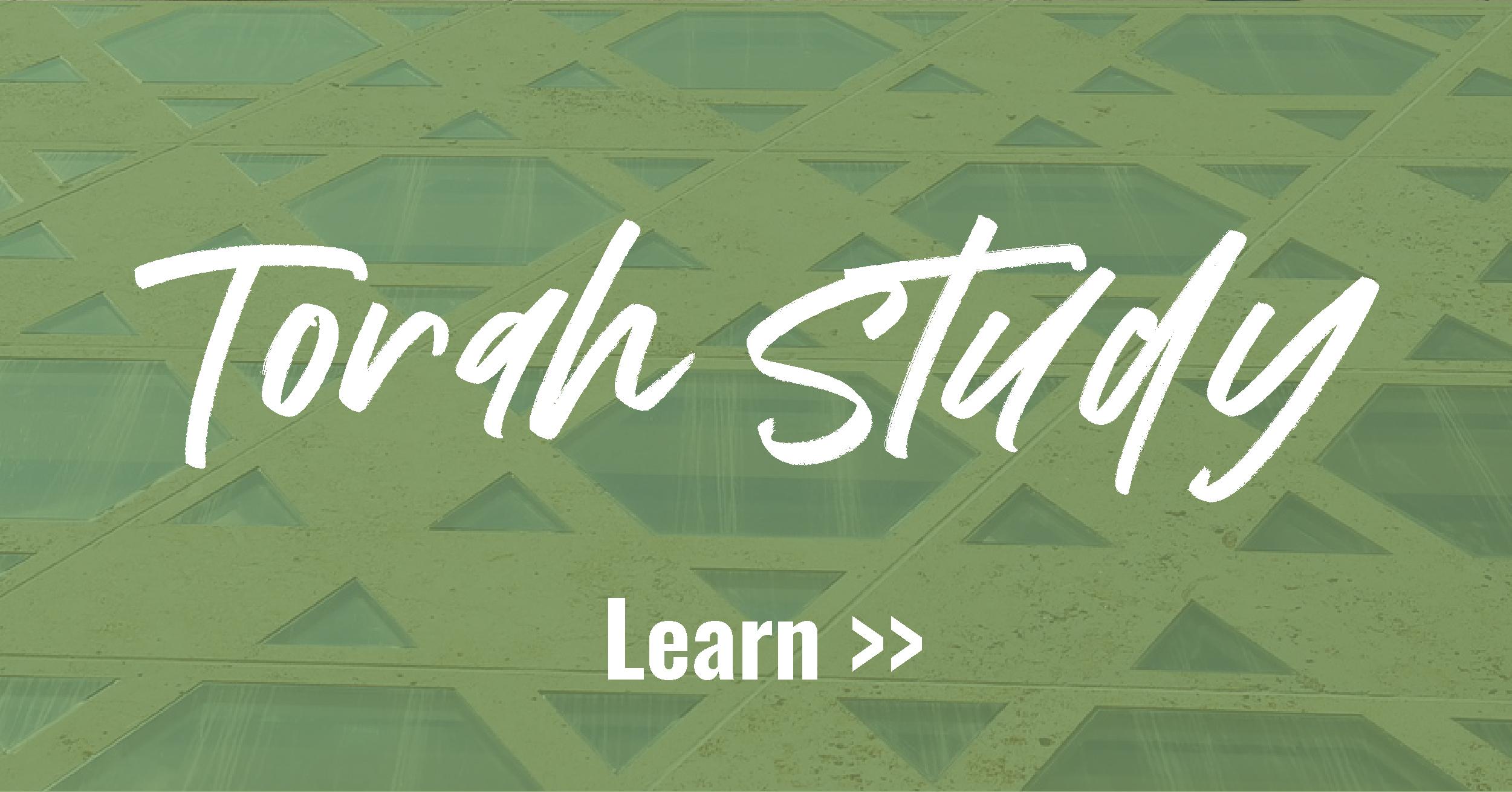 shabbat social_torah study